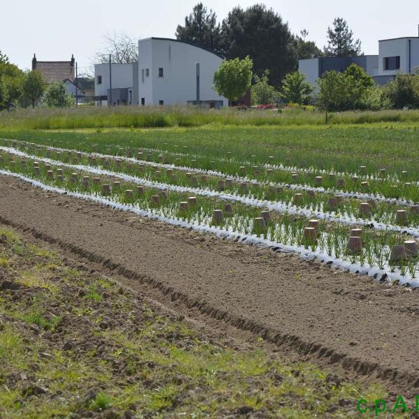 Les jardins de cocagne